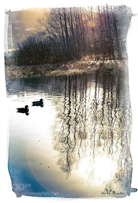Photograph Feeling of springlike optimism by ToveLise Mossestad on 500px