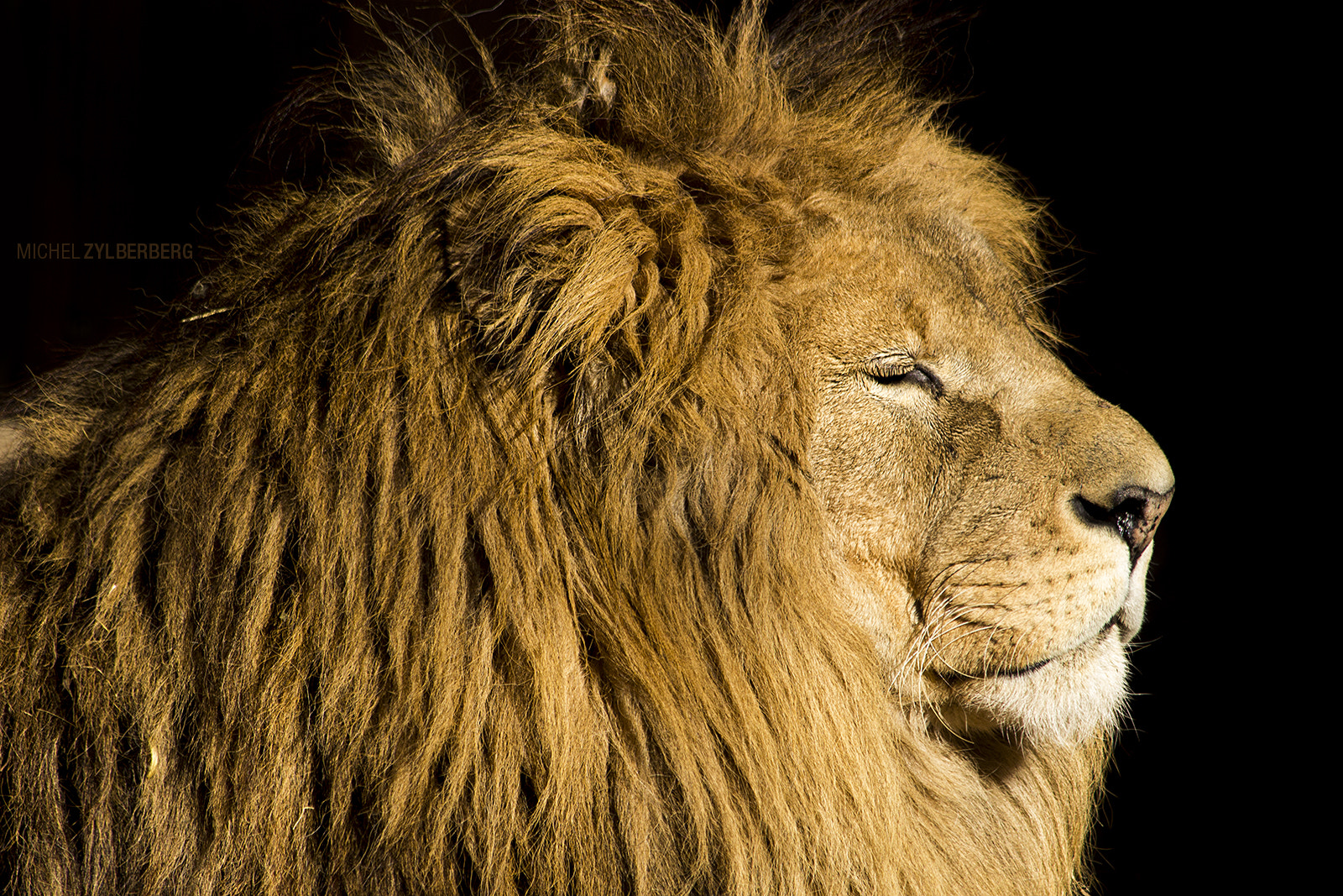 Photograph The King by Michel Zylberberg on 500px