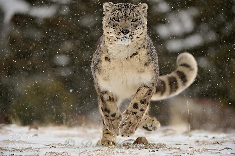 Winter Tour Highlight - The Cat Family Inspiring Photography