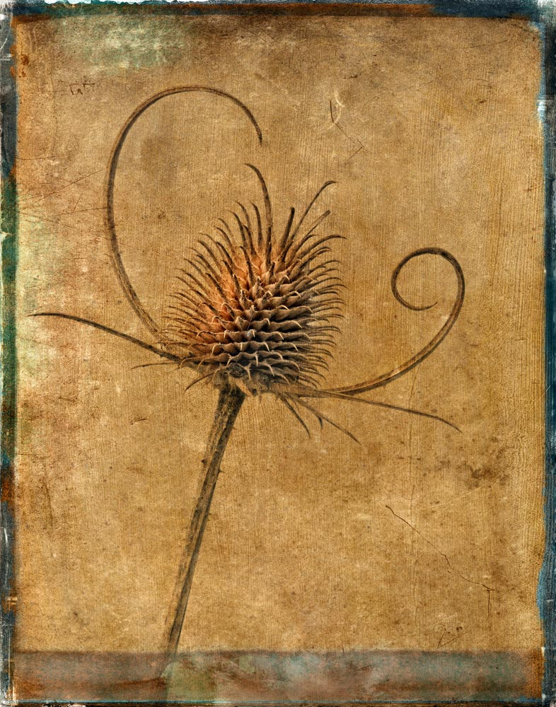 Photograph Dried Thistle by Bob Jensen on 500px