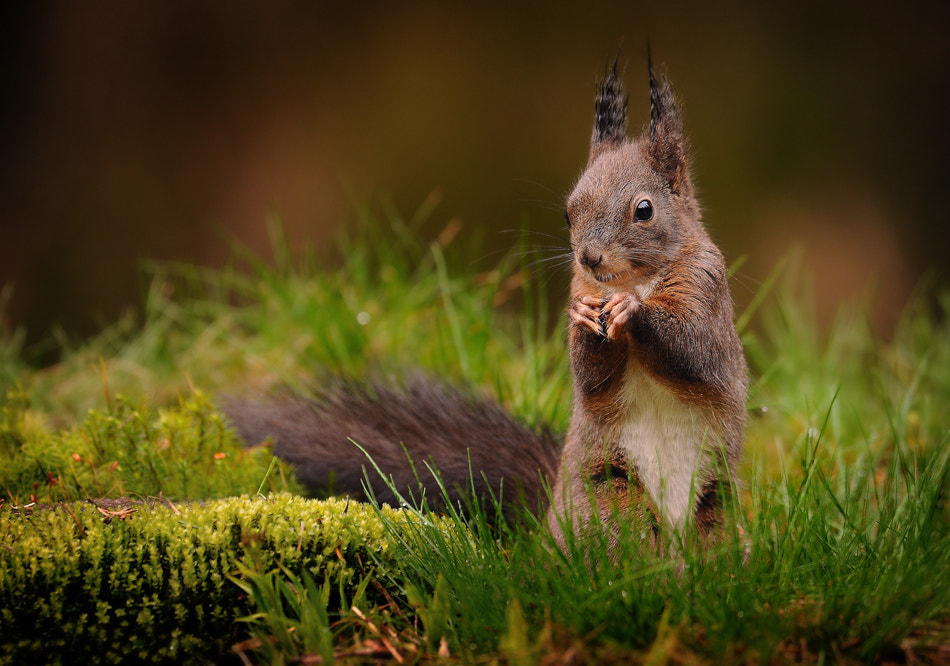 Photograph squirrel by Milan Krasula on 500px