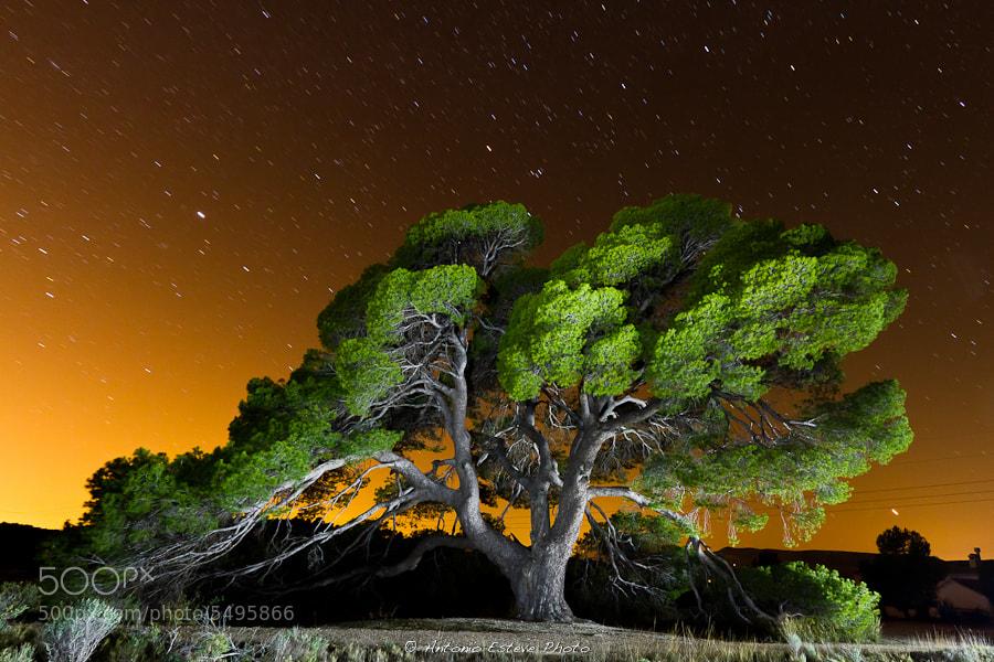 Photograph Untitled by Antonio  Esteve on 500px