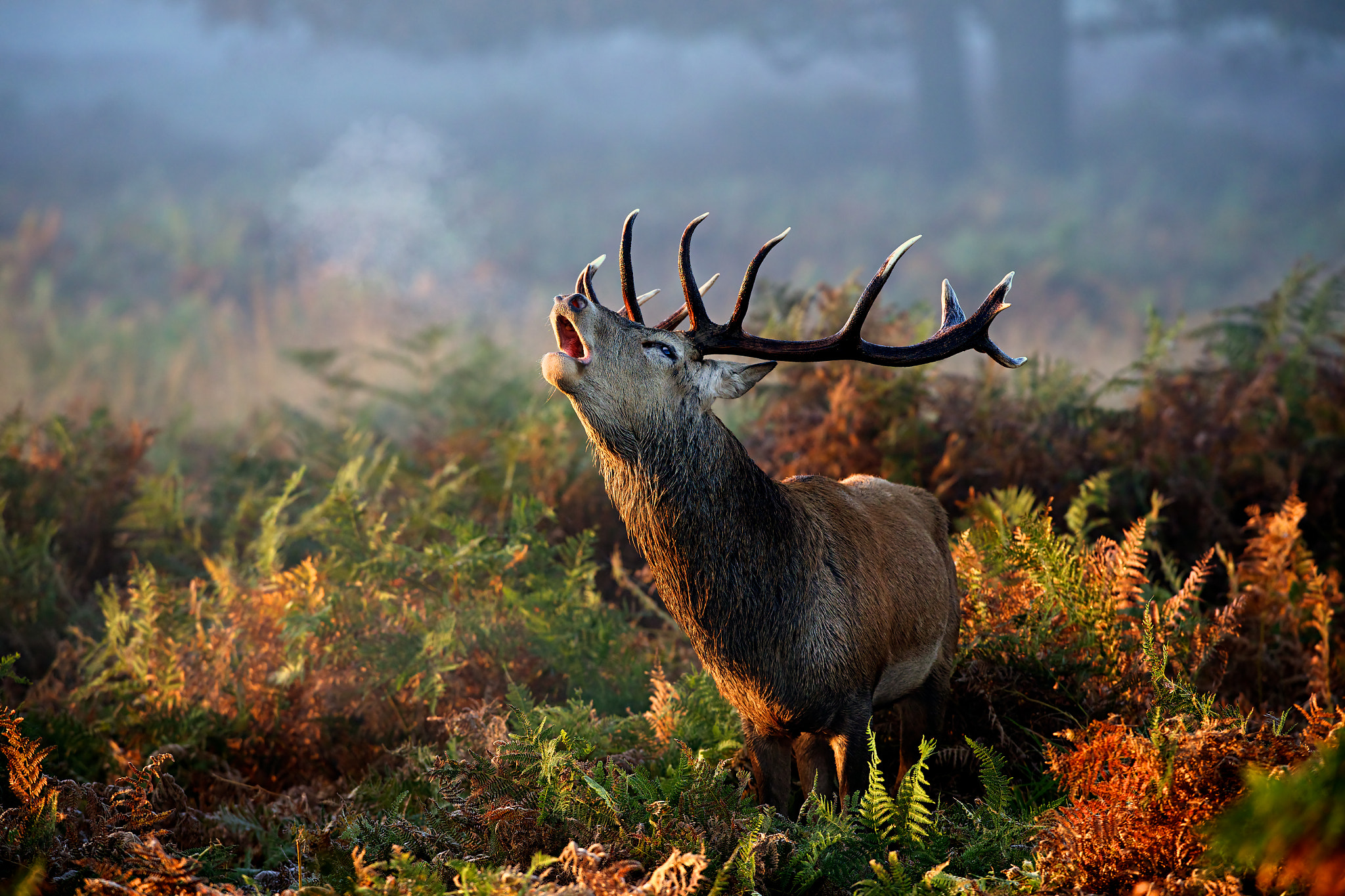 Photograph 250000 thanks by Mark Bridger on 500px