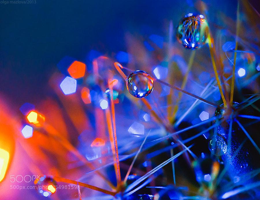 ... by Olga Mazlova on 500px.com