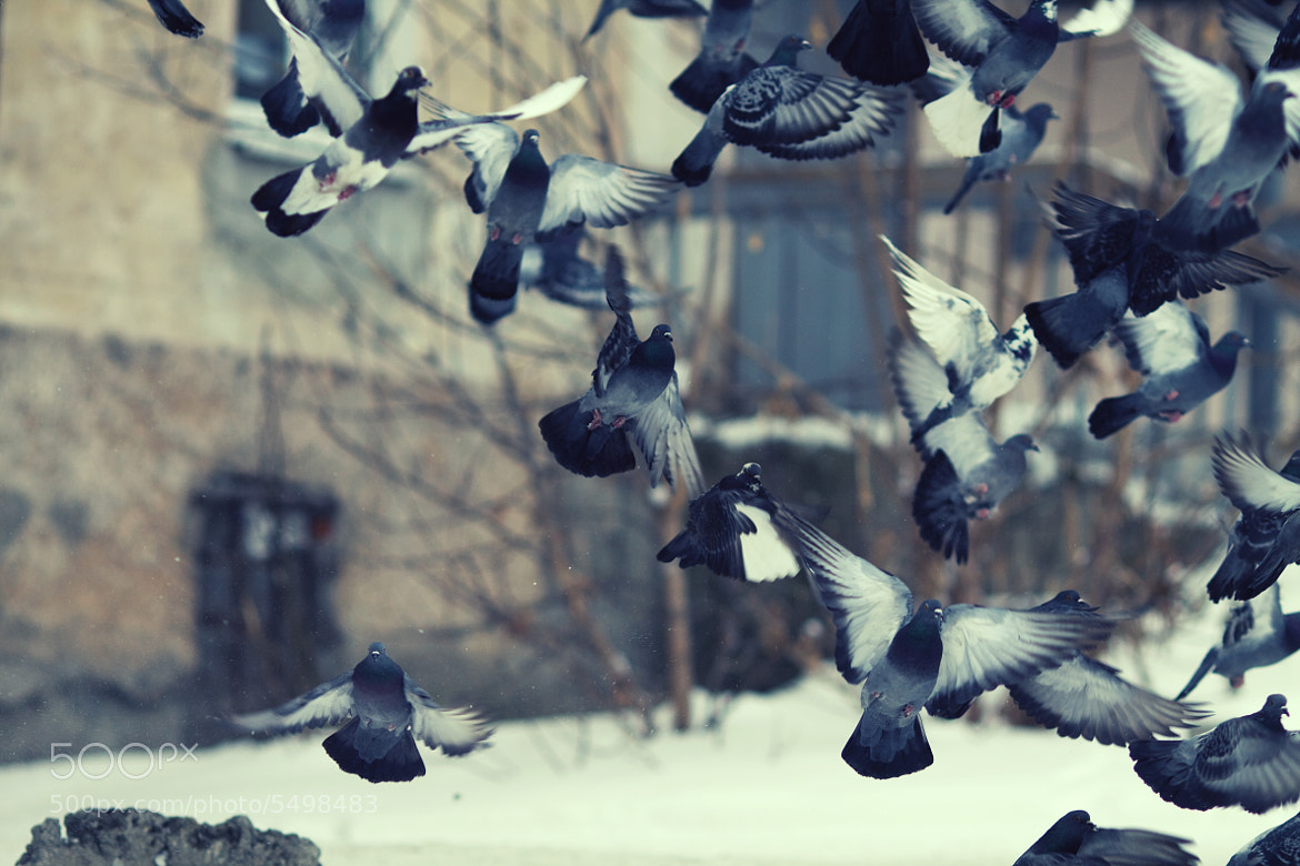 Photograph pigeons by Tany Taylor on 500px