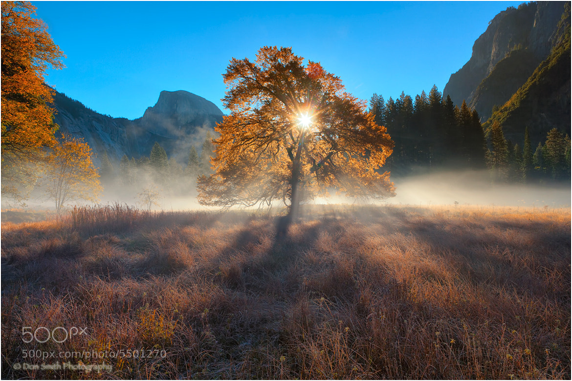 Photograph Back-Lit Elm, Cooks Meadow by Don Smith on 500px