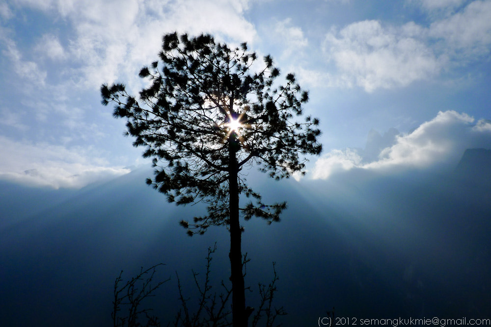 Photograph Tree of life by Ricky S on 500px
