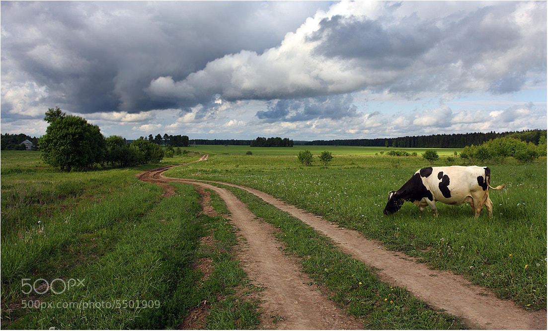 Photograph Summer near Kaluga by Victoria Ivanova on 500px