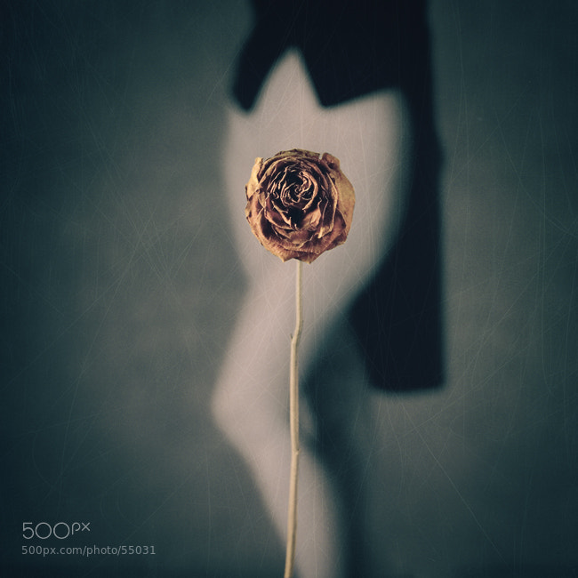 Photograph Rose I by Zilvinas Valeika on 500px