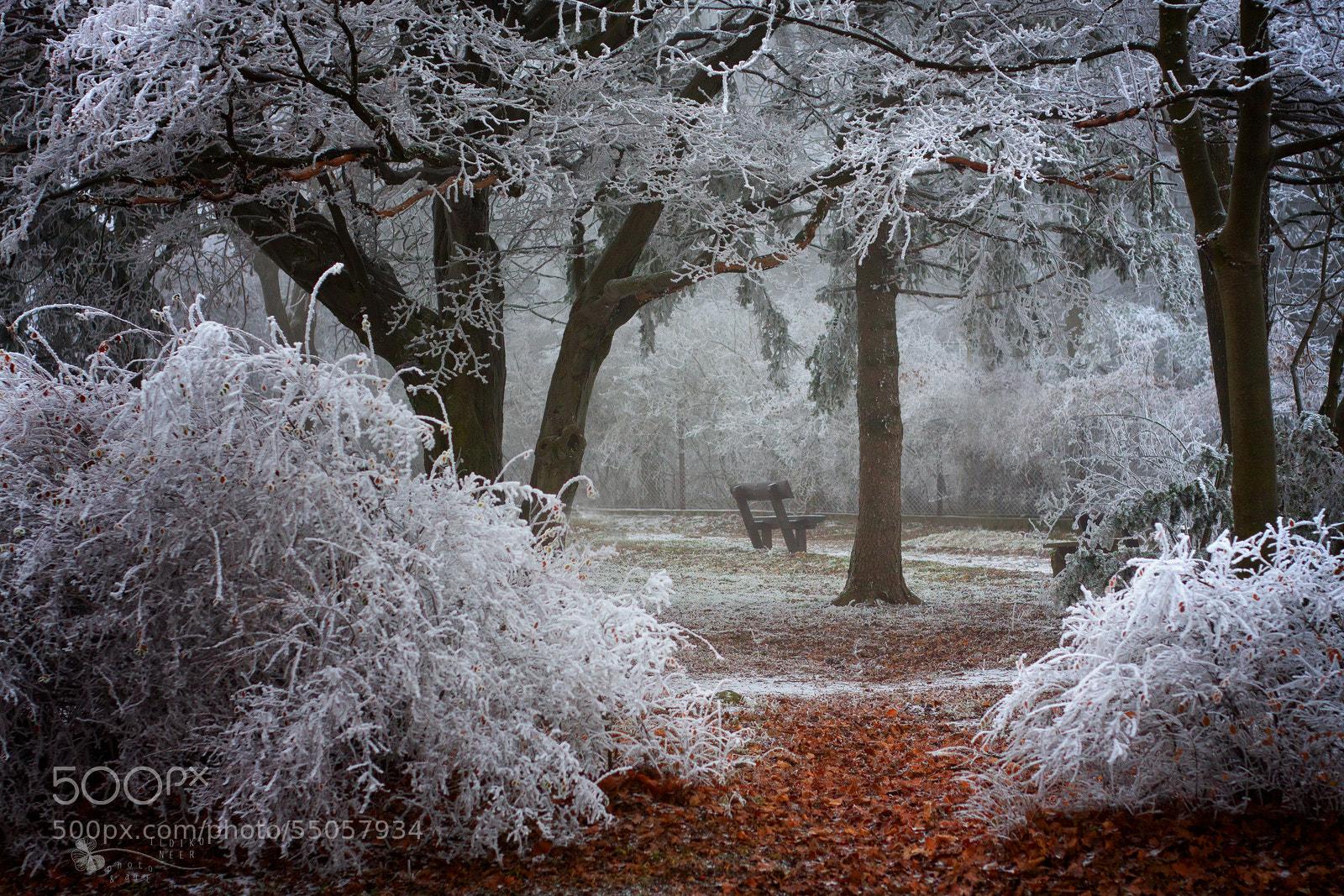Photograph Winter Wonder by Ildiko Neer on 500px