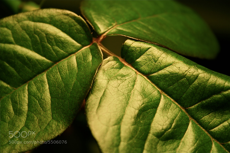 Photograph Leaf by Mikhail Glazkov on 500px