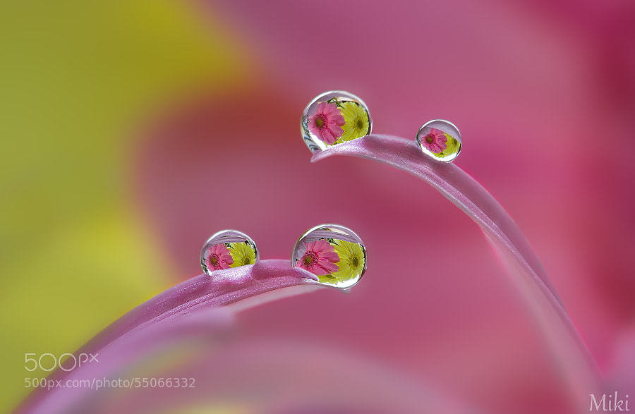 Photograph ballet dancers by Miki Asai on 500px