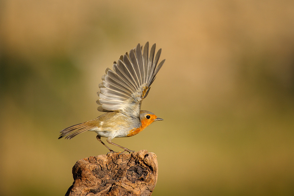 Photograph fly away by Stefano Tassano on 500px