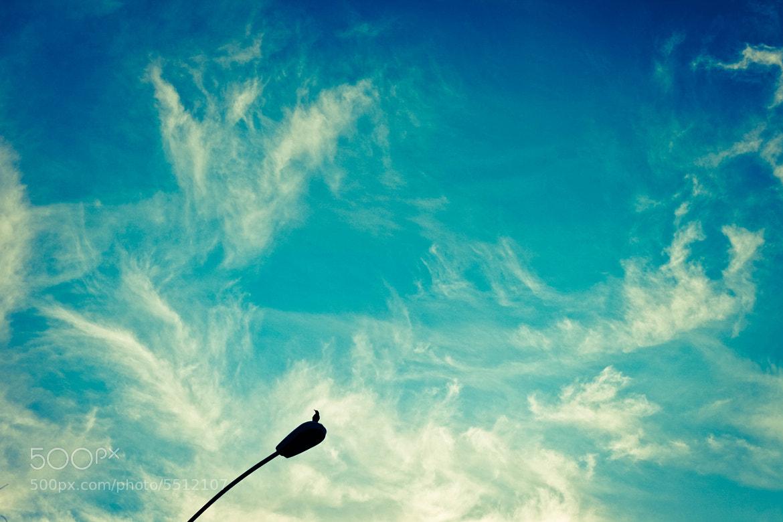 Photograph Bird, yeah. by Tori Lesikar on 500px