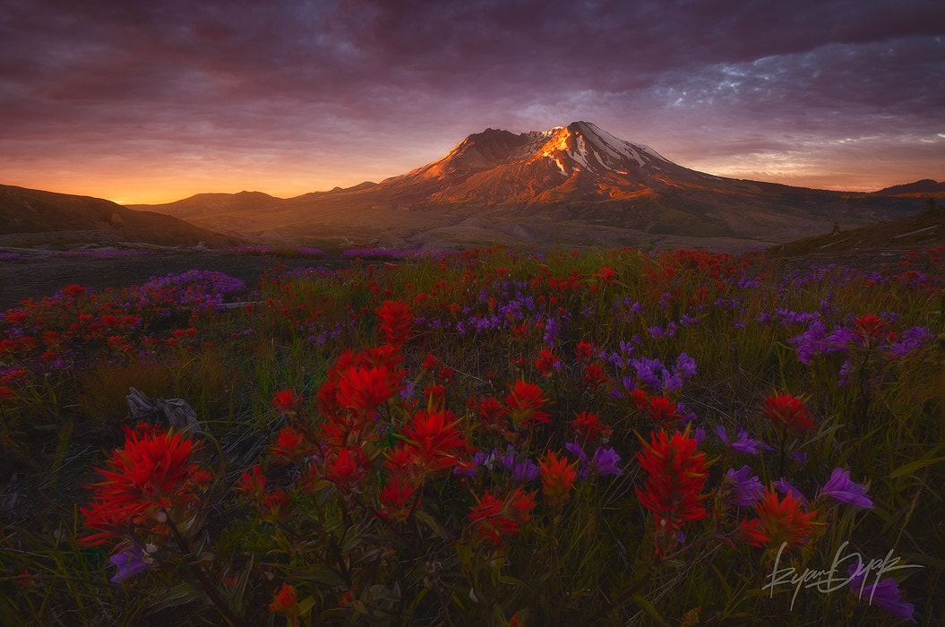 Photograph The Rebuilding by Ryan Dyar on 500px