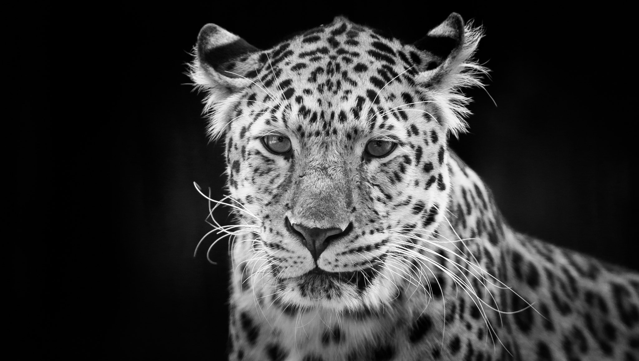 Photograph In B/W by Peter Hausner Hansen on 500px