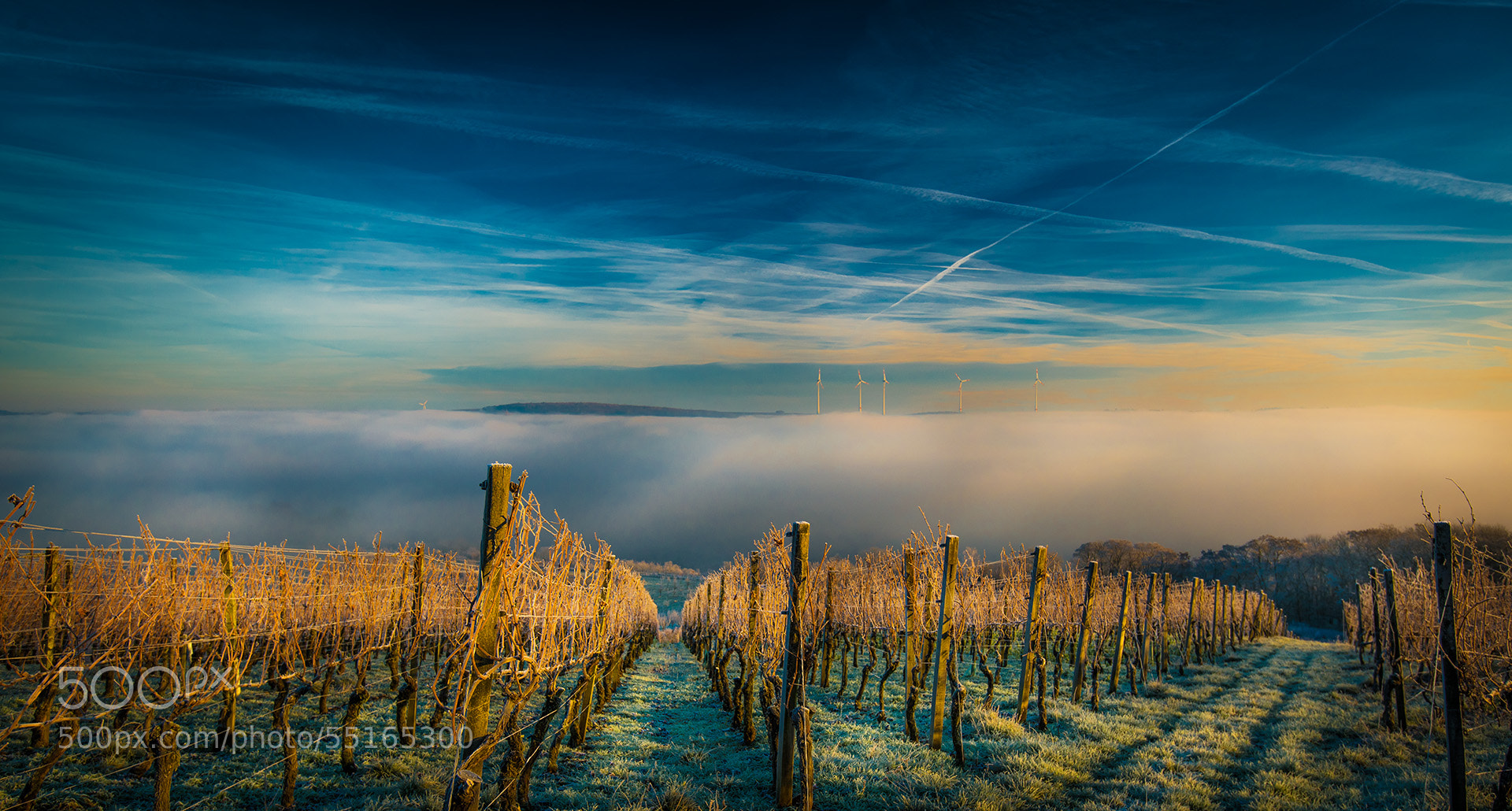 Photograph Frozen Vineyards by Rolf Nachbar on 500px