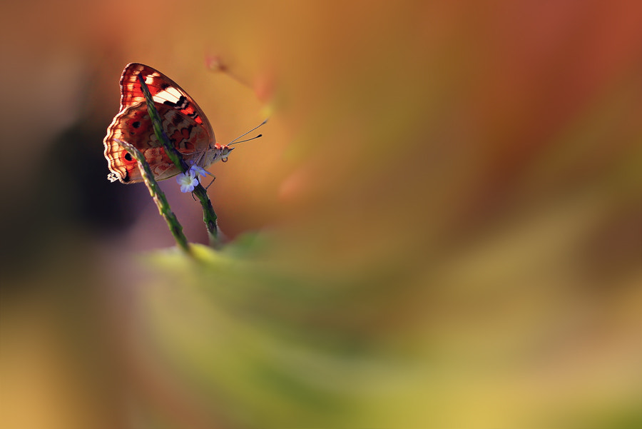 Photograph day dreaming by Toto suprayogi on 500px