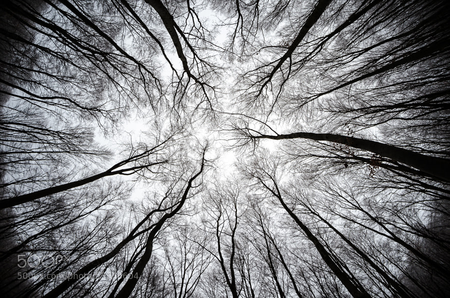 Photograph Trees by Alexandru Lates on 500px