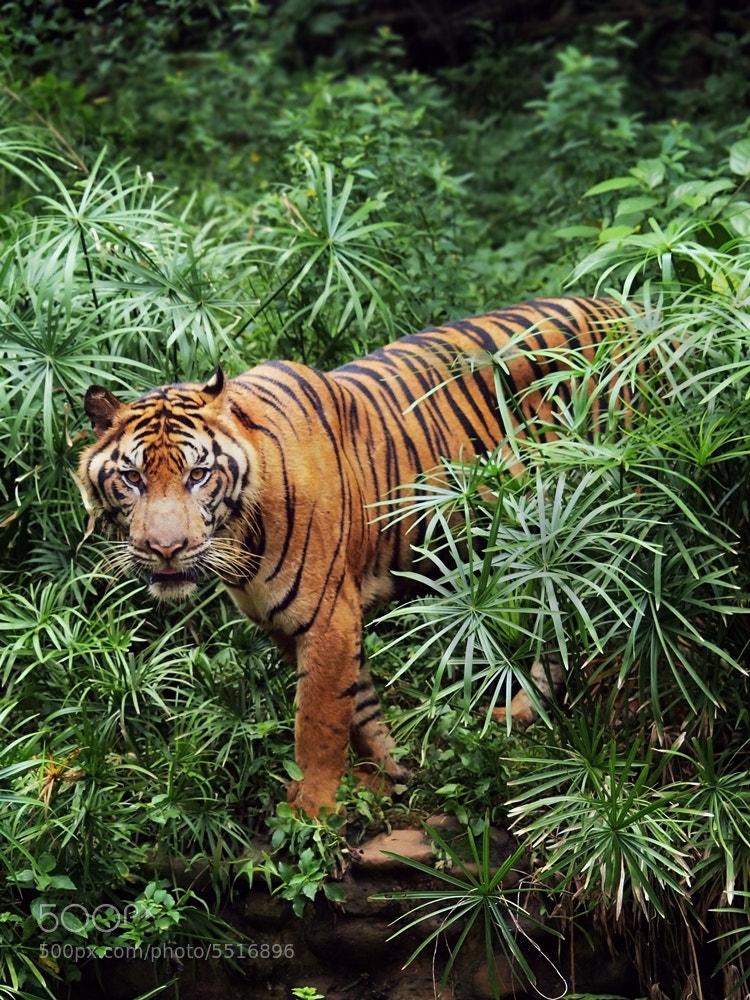 Photograph hunters hunted by Irawan Subingar on 500px