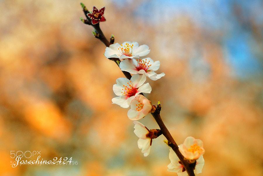 colores de primavera by Jose Maria Ramos Montero (Josechino2424) on 500px.com