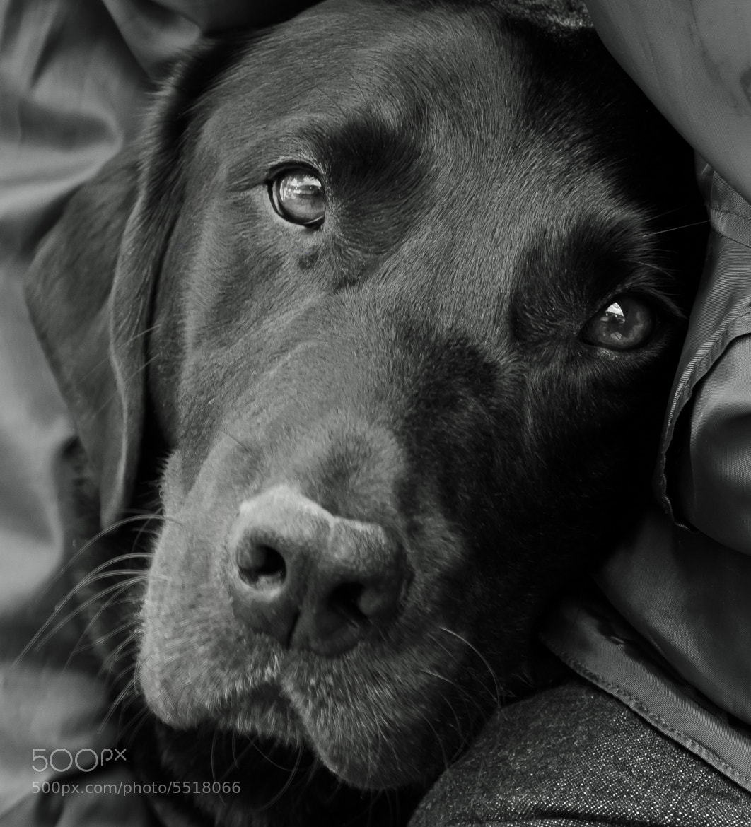 Photograph Dexter by Arthur Greenslade on 500px