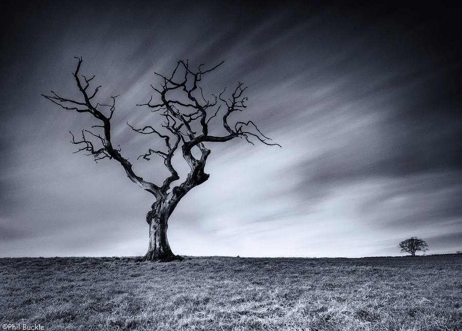 Photograph Lone Tree by Phil Buckle on 500px