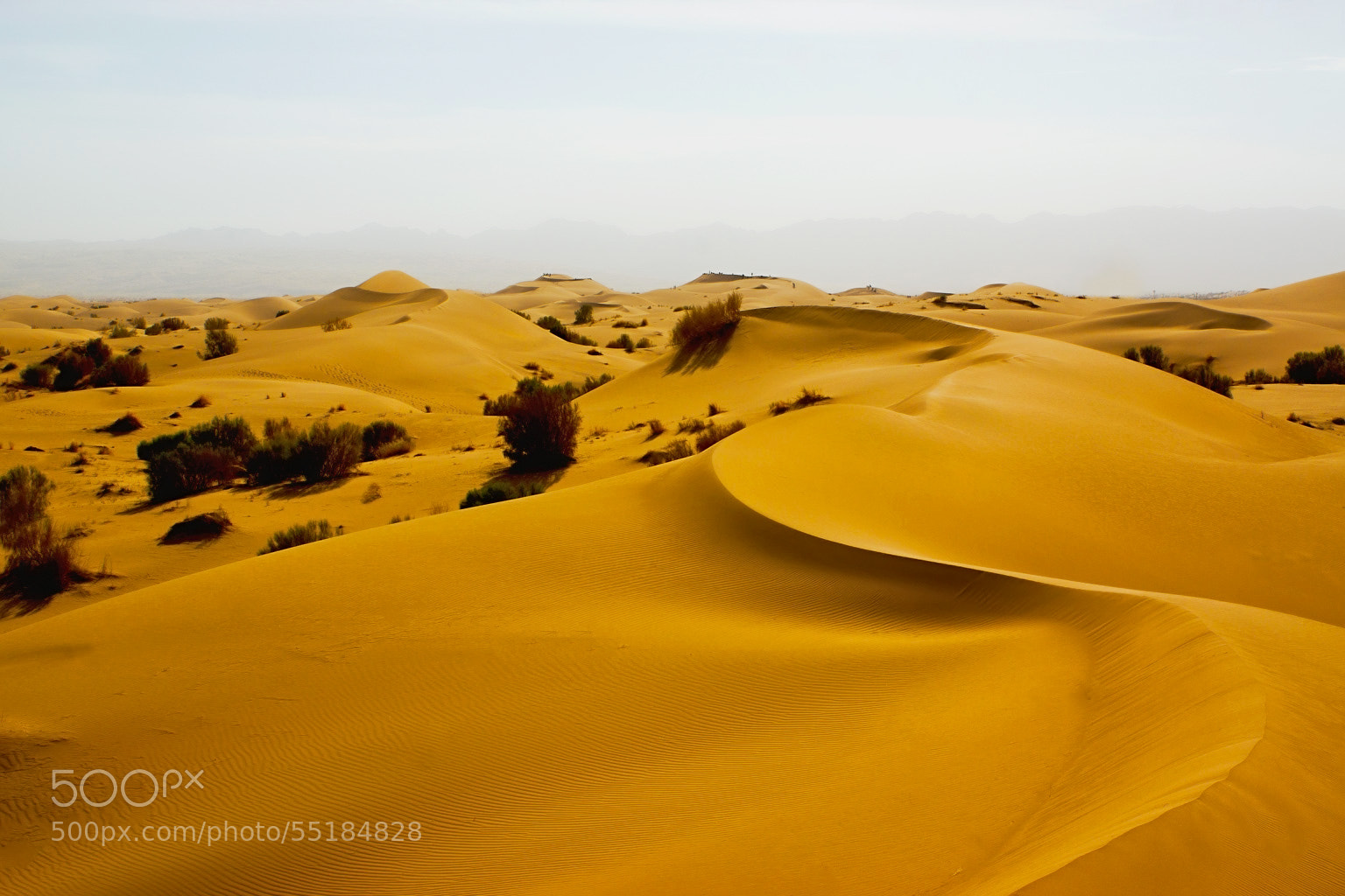 Photograph ~Desert at noon~ by S'Mojtaba Hosseini on 500px