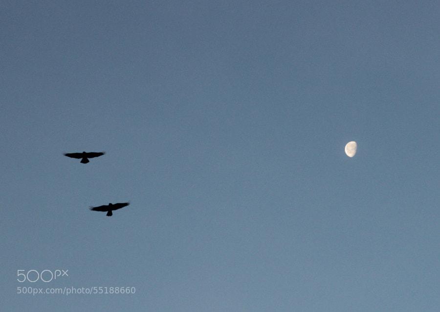 moon and crows by Maxim Tashkinov on 500px.com