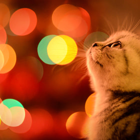 Waiting for Christmas by Ioana Cucos on 500px.com