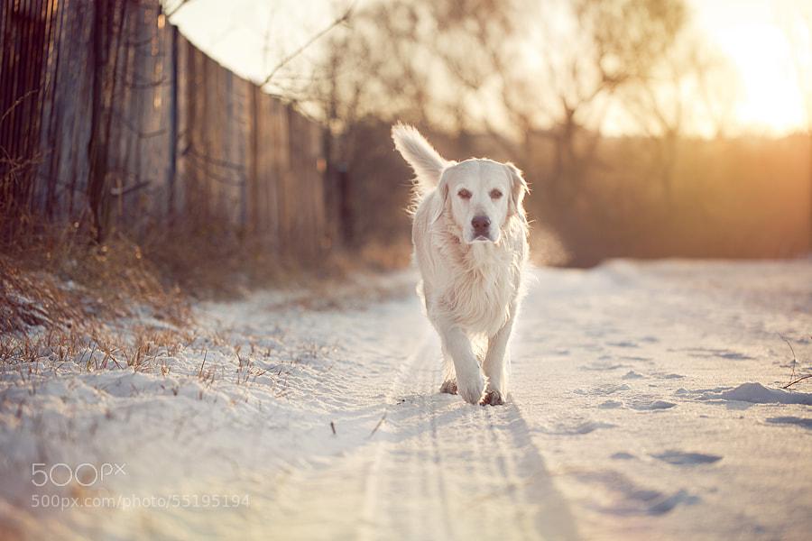 Photograph Morning run by Tomasz Wieczorek on 500px