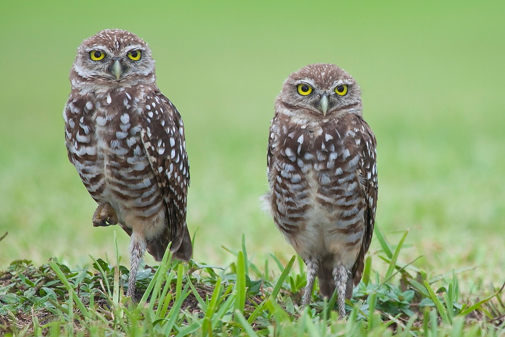 Photograph Two of them by Miguel Angel Leyva on 500px