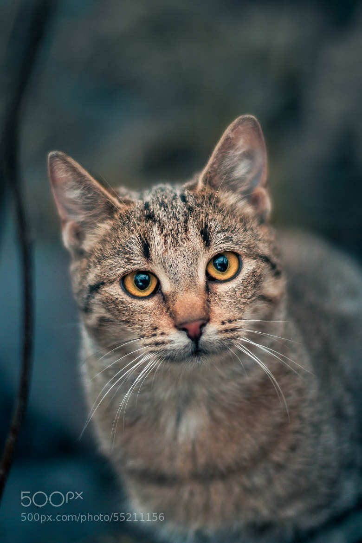 Photograph Sweet cat by Yaroslav Kuryanovich on 500px