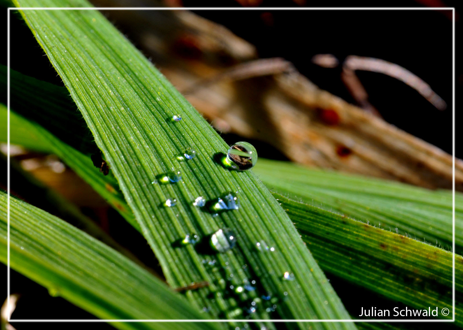 Photograph Dewdrop by Julian Schwald on 500px