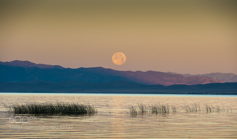 Photograph Supermoon by Robbie Petersen on 500px