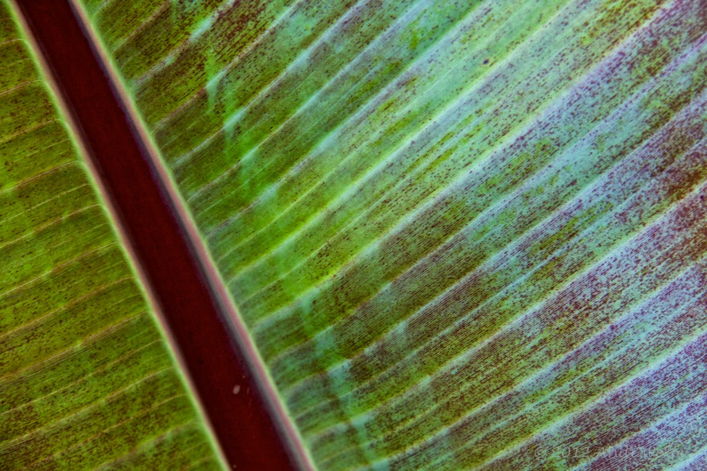Photograph Leaf detail by Andi Wolfe on 500px