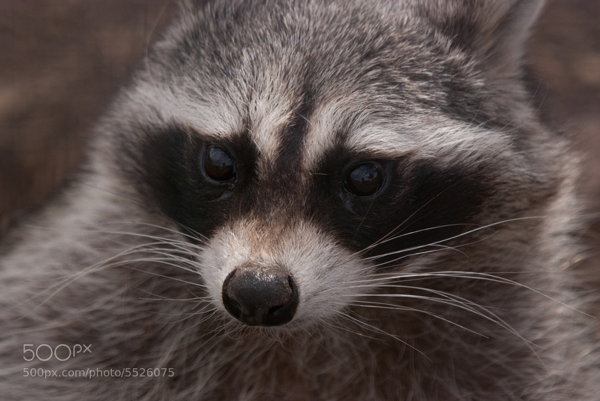 Photograph Bandit by Doug Chesser on 500px