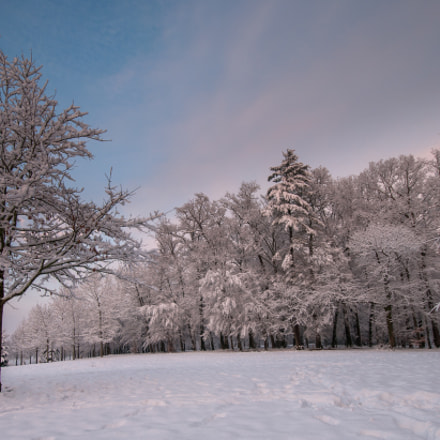 Winter in park Franqueville, near Pau, France