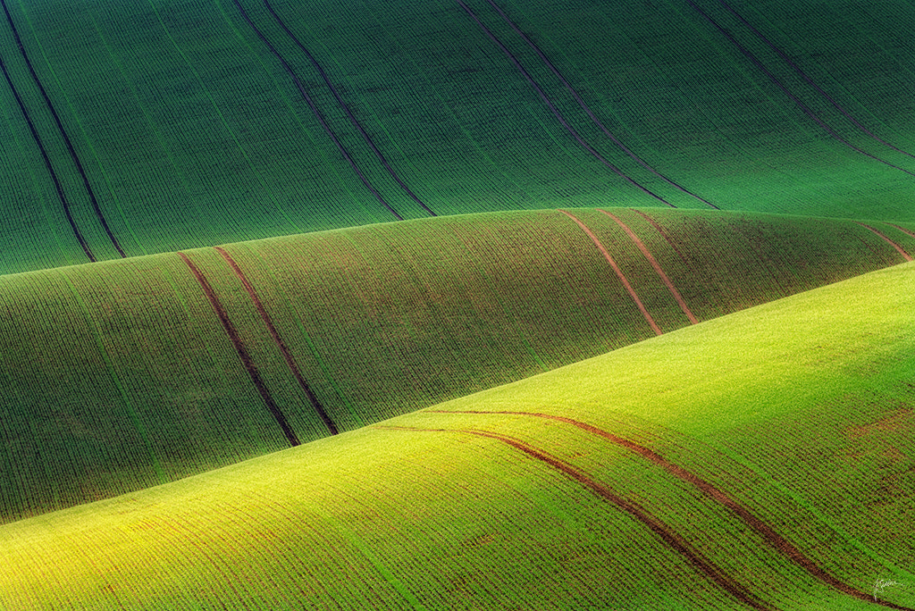 Photograph On the green carpet II by Janek Sedlar on 500px