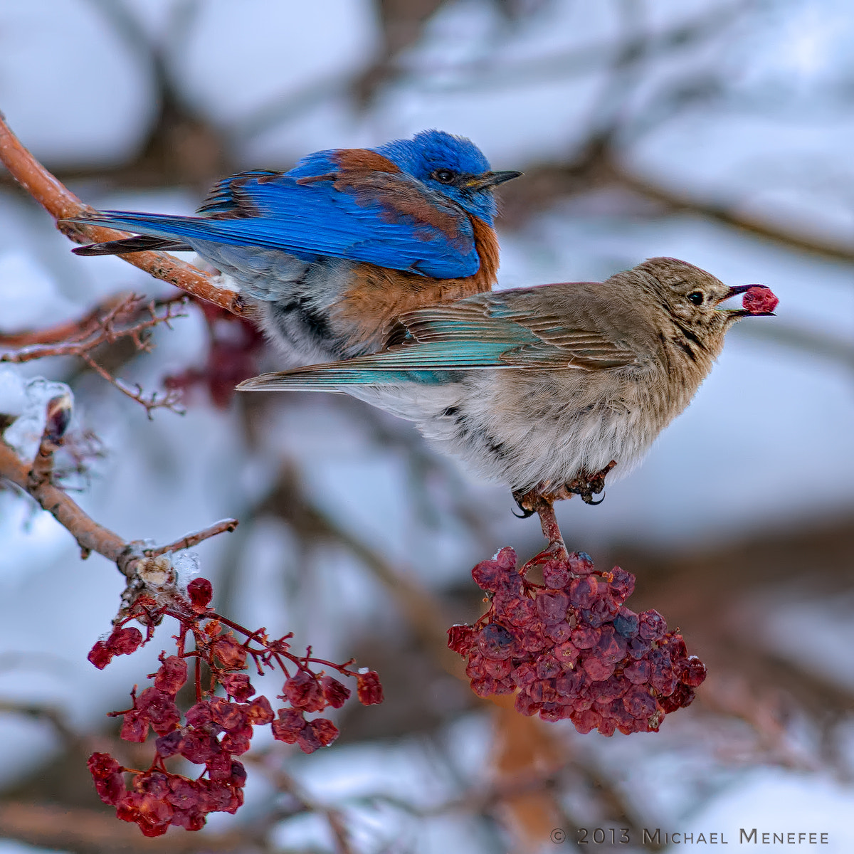 Photograph Frosty Blue Love by Michael Menefee on 500px