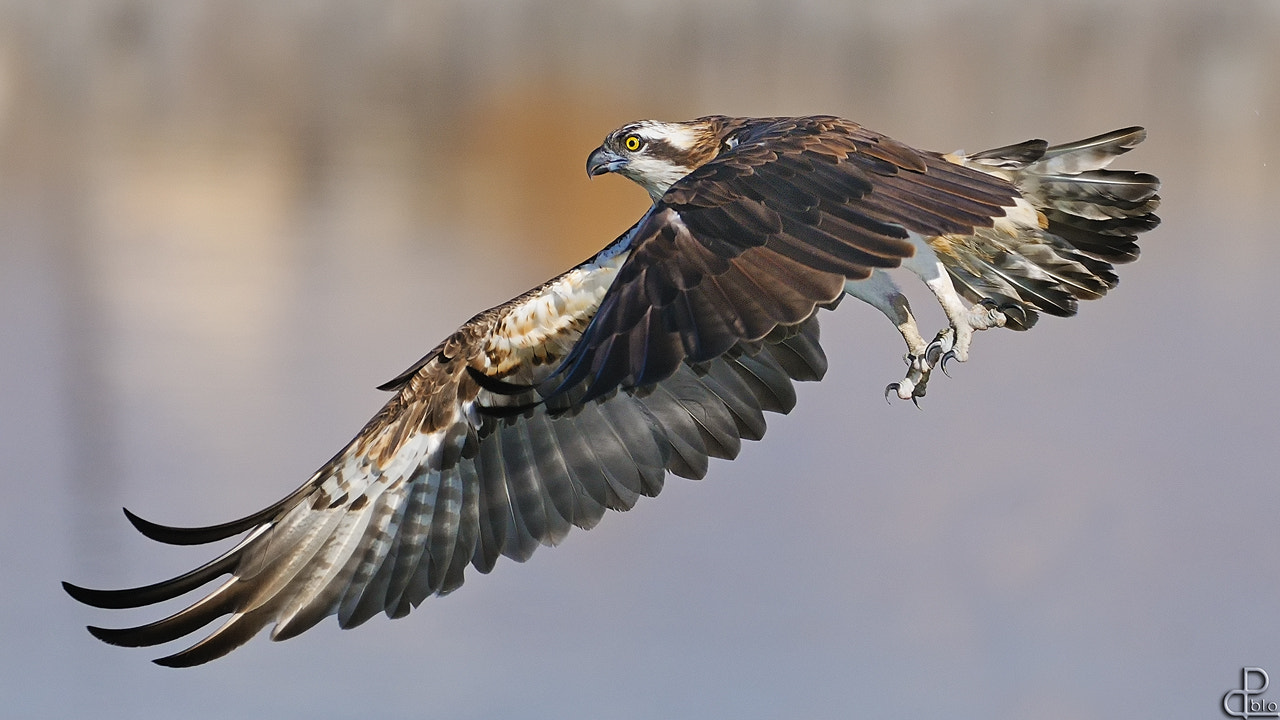 Photograph Volare by Pablo Rudaeff on 500px