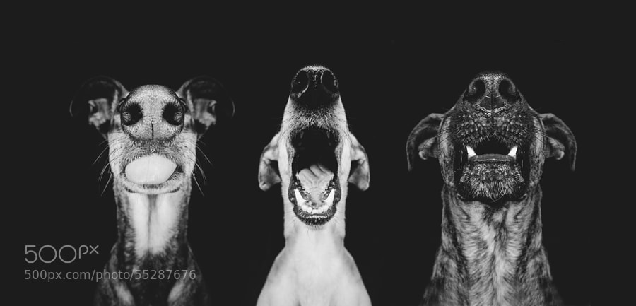 Dog photography - Photograph Nice nosing you by Elke Vogelsang on 500px
