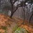 El sendero hacia la niebla