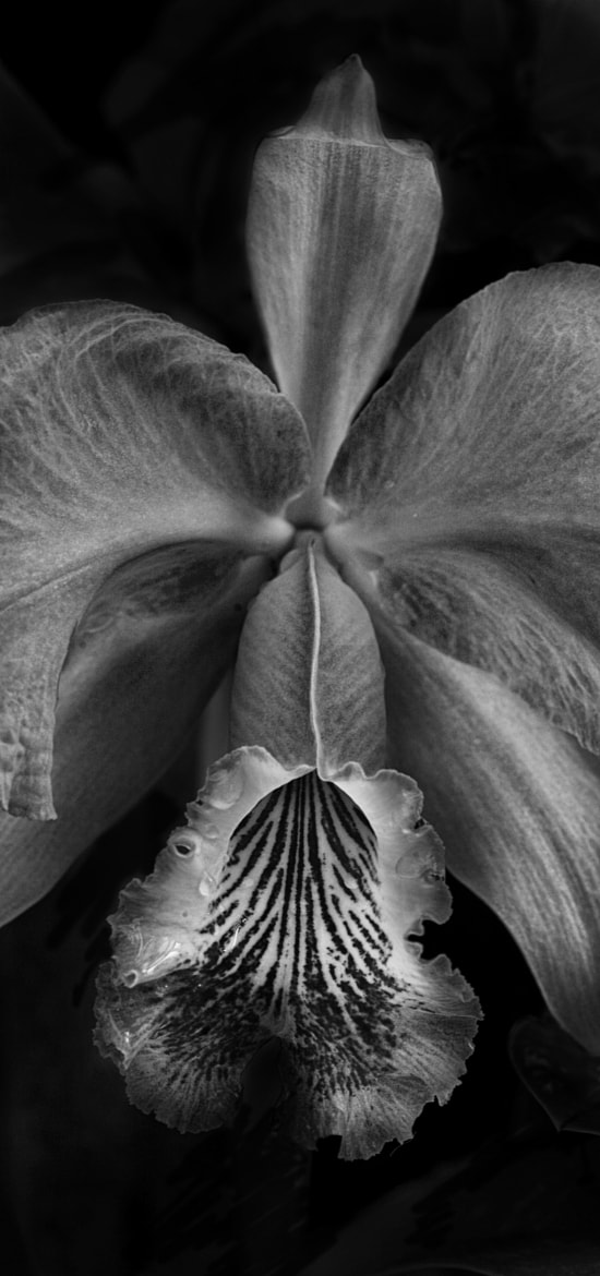 Photograph Orchid by Barry Donaghue on 500px