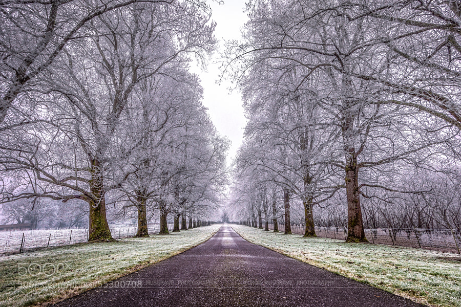 Photograph Freezing Fog in the Willamette Valley, Oregon by Conor Musgrave on 500px