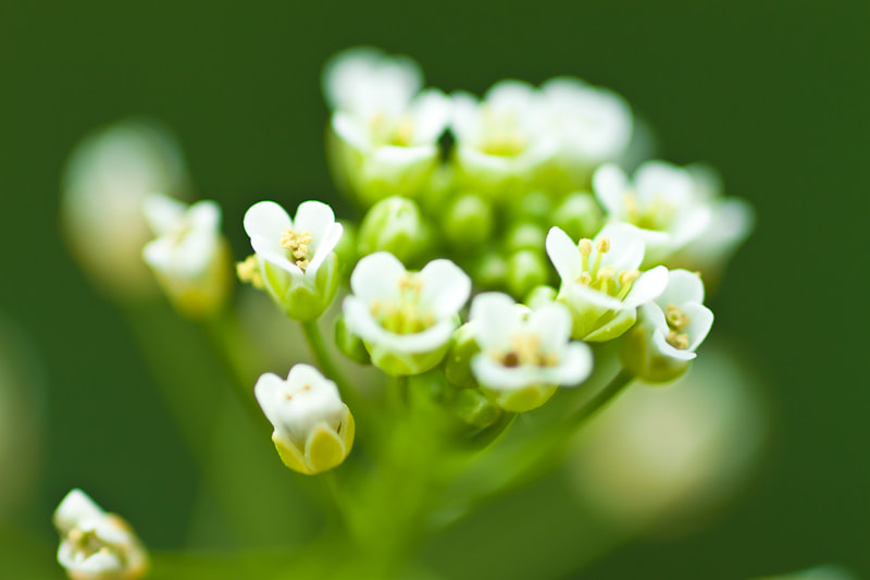 Photograph tiny flowers by Stefan Pasch on 500px
