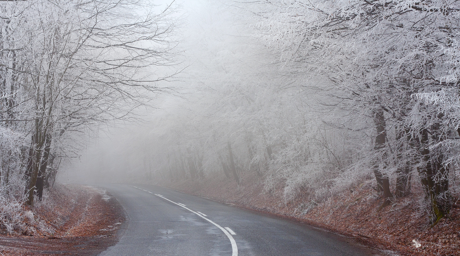 Photograph Frosty Road by Ildiko Neer on 500px