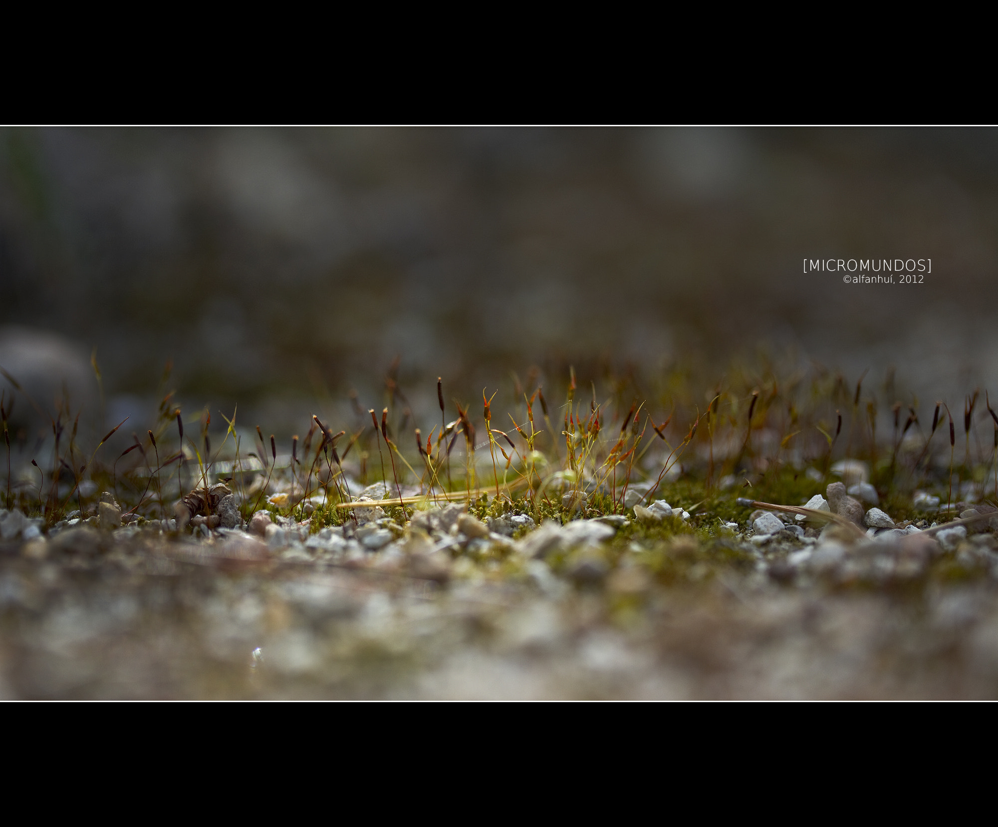 Photograph Microworlds by alfanhuí . on 500px