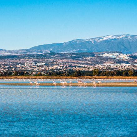 Cyprus (Salt Lake, Akrotiri UK) wintering flamingos.