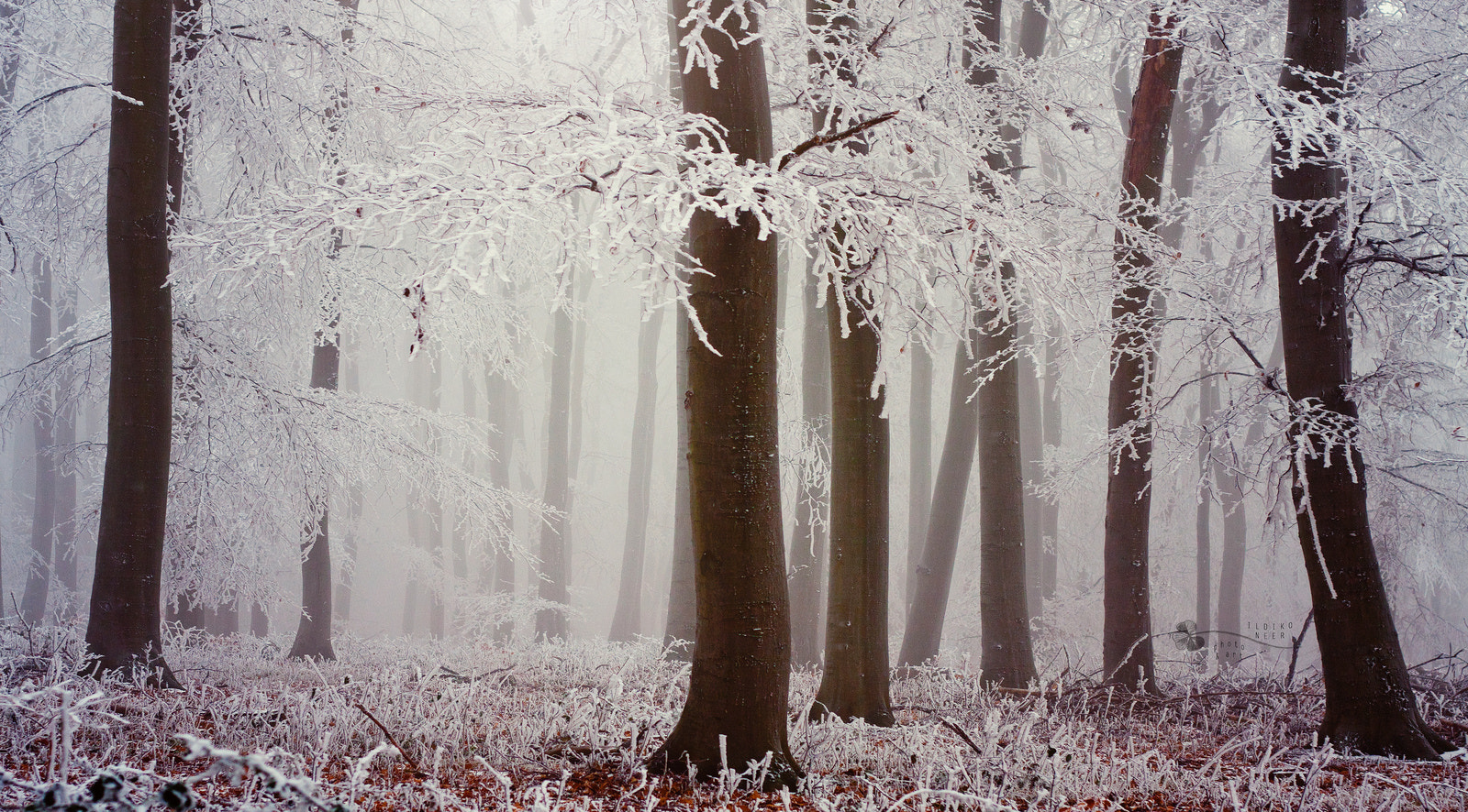 Photograph White Saints by Ildiko Neer on 500px